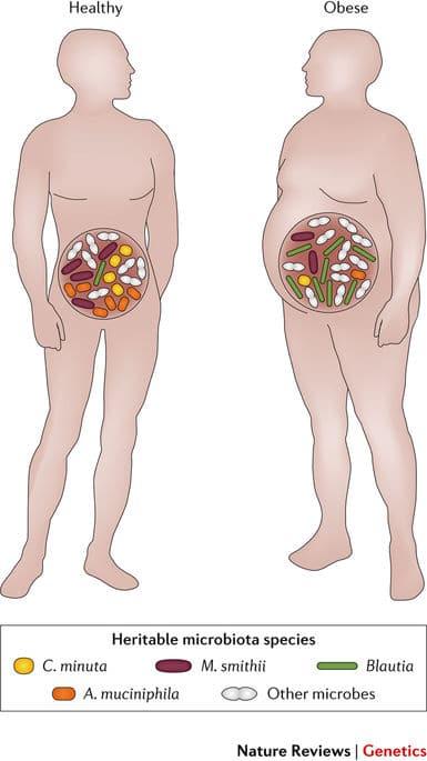 microbiome copy